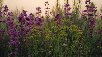 Sunrise through flowers and mist video