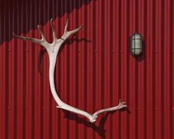 astas como trofeo de caza colgado en la pared de una cabaña roja foto