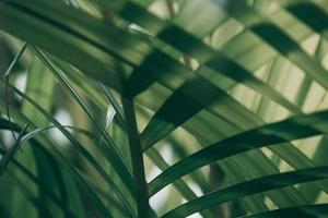 Blurred tropical green leaf outside the window photo