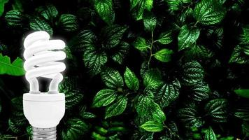 Bombilla fluorescente sobre fondo de hoja verde tropical foto
