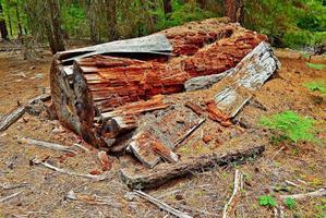 Big Rotten Log a forest scene along FR614 northwest of Camp Sherman OR photo
