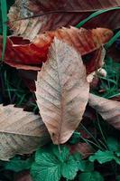 dry brown leaves in autumn season photo