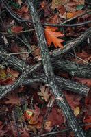 ramas de árboles y hojas en el suelo en la temporada de otoño foto