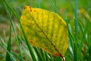 hoja amarilla en la temporada de otoño foto