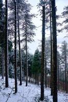 snow in the mountain in winter season photo