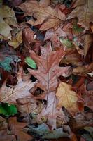 dry brown leaves background in autumn season photo