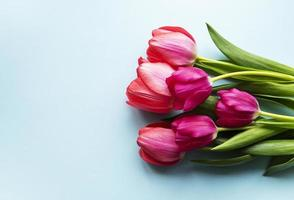 Beautiful tulips bouquet photo
