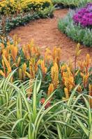 Pathway with gardening blooms photo