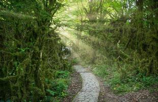 paisaje natural con árboles cubiertos de musgo foto