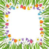 Spring, Tulip, Bluebell and Narcissus, Flowers Background vector