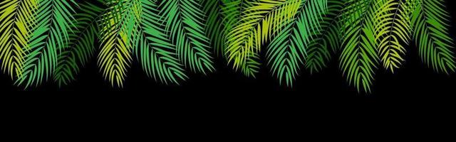Beautiful Palm Tree Leaf Silhouette Background vector