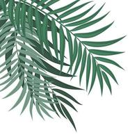 Abstract Background with Palm Leaves vector