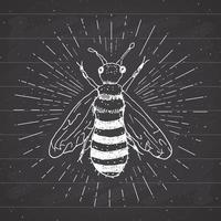 Vintage label, Hand drawn bee, grunge textured badge, retro logo template, typography design vector illustration on chalkboard
