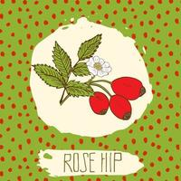Dogrose hand drawn sketched fruit with leaf on background with dots pattern. Doodle vector rose hip for logo, label, brand identity