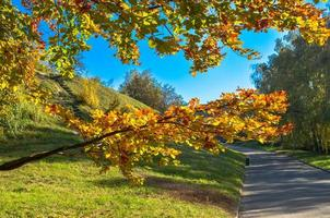Beautiful romantic alley in a park with yellow colorful trees and sunlight photo