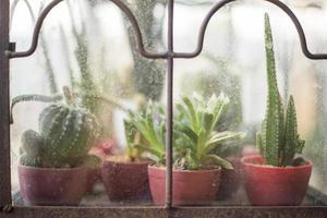 Cactus in coffee shop photo