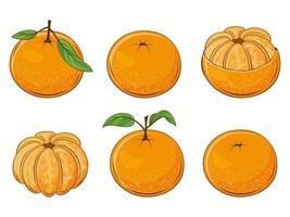 Set of Juicy Mandarins vector
