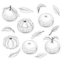 Set of Juicy Mandarins Monochrome vector
