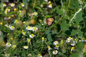 a small butterfly photo