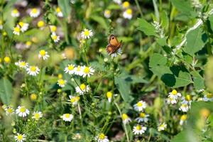 flying small butterfly photo