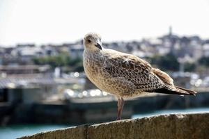 una gaviota mirando foto
