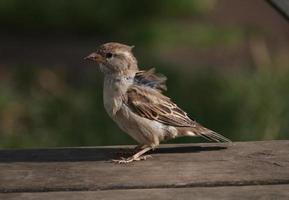 a small sparrow photo
