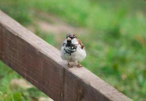 sparrow on a pole photo