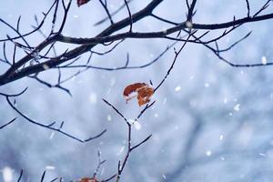nieve en las plantas en la temporada de invierno foto