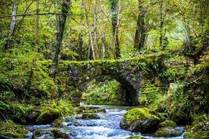 puente de piedra en el bosque foto
