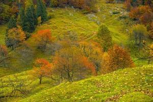 colores otoñales en las colinas foto