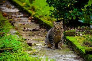 gato en el camino de entrada uno foto