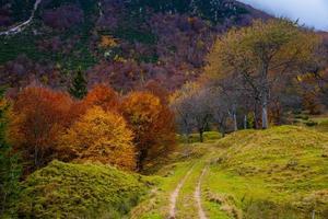 camino blanco entre arboles foto
