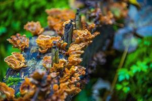 hongo parásito en el tronco uno foto