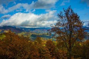 follaje y montañas foto