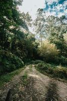 camino brillante en medio del bosque con muchos árboles foto