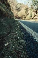 Cerca de algunas margaritas cerca de la carretera del bosque. foto