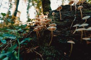 Bunch of mushrooms in the forest photo