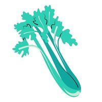 Juicy celery isolated vector illustration Farm greens