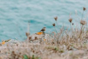pajarito frente al mar foto
