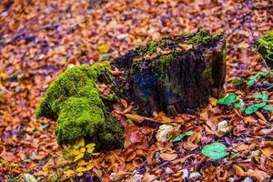 madera y musgo foto
