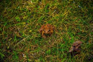 frog among the meadows one photo
