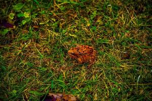 frog among the meadows photo