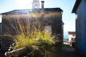 tuft of grass on the wall photo