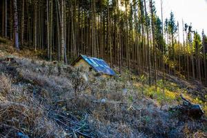 cabin among pine forests photo