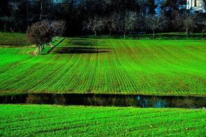 los campos sembrados de vicenza crecen foto