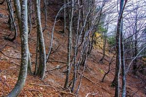 autumn forest zero photo