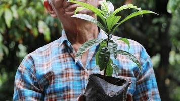 An elderly farmers hand holding seedlings in black plastic bag to plant trees in the garden video