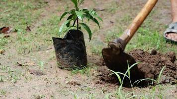 close-up de agricultores usando uma enxada para cavar o solo antes de plantar mudas na fazenda video