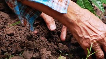 Close up of farmers hand planting a tree in the farm video