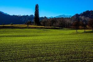 los campos sembrados de vicenza crecen uno foto